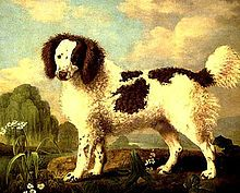 Norfolk Spaniel - The breed was a freckled white dog with either liver or black marking. By the end of the 19th century the description of a Norfolk Spaniel had changed slightly, The Spaniel Club breed standard for a Norfolk Spaniel in 1897 was for the animal to have a coat of either black and white or liver and white which was not curly-simply looking like a large Cocker spaniel