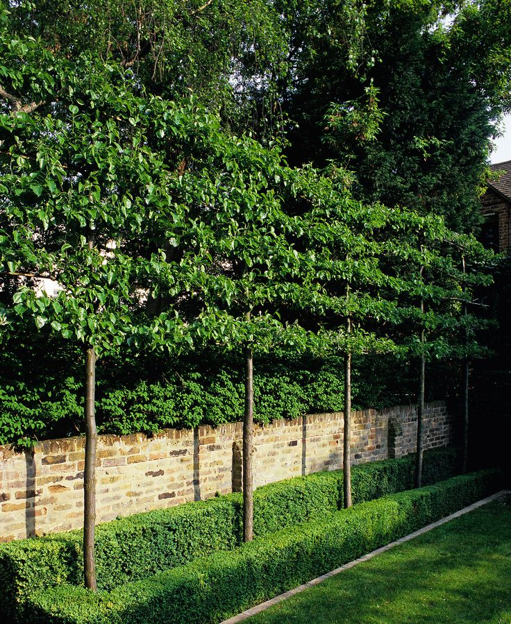 screen from neighbours using pleached trees. Luciano Giubbilei - Kensington Gardens