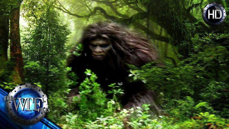 IS BIGFOOT ACTUALLY STALKING HUMANS FROM OUR VERY OWN BACK YARDS?