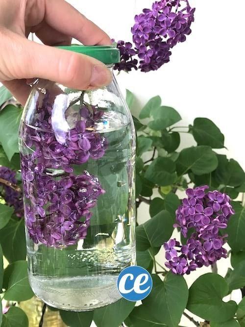 How to scent white vinegar so that it smells good lilac.