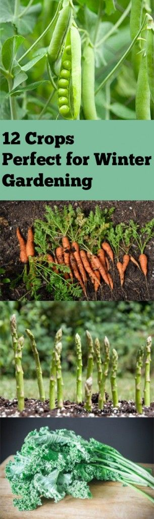 Winter garden, winter gardening, winter gardening hacks, popular pin, gardening, gardening 101, gardening tips and tricks, vegetable garden, grow your own veggies, veggies in the winter (Diy Garden Hacks)