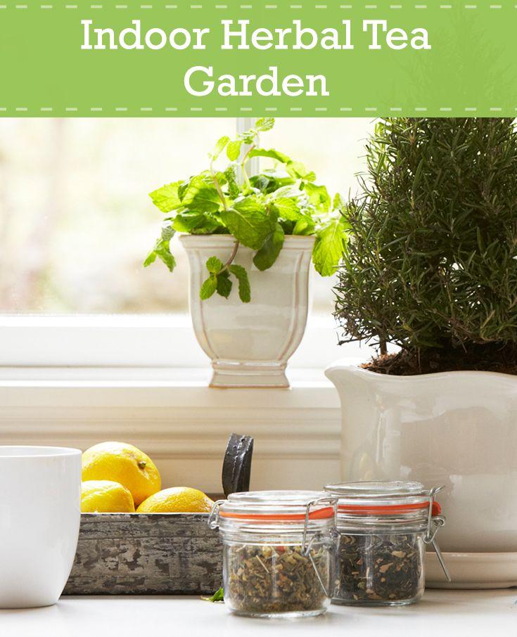 Make an indoor tea garden this winter