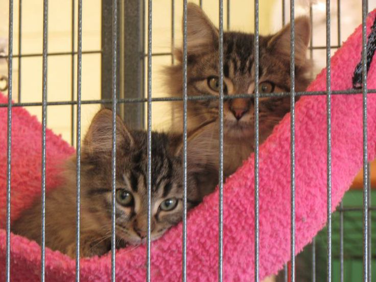 Theodore is on the left, Alvin is on the right.                    ADOPTED TOGETHER!!!..