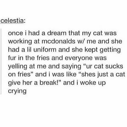I had a dream where I found a couple cats outside a McDonald's in a grassy field