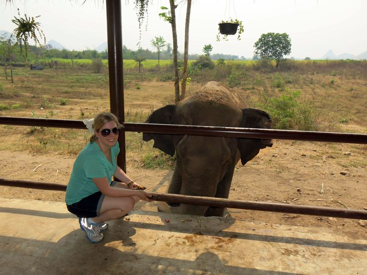 Elephant Tourism in Thailand needs to be ethical, without causing harm to elephants!