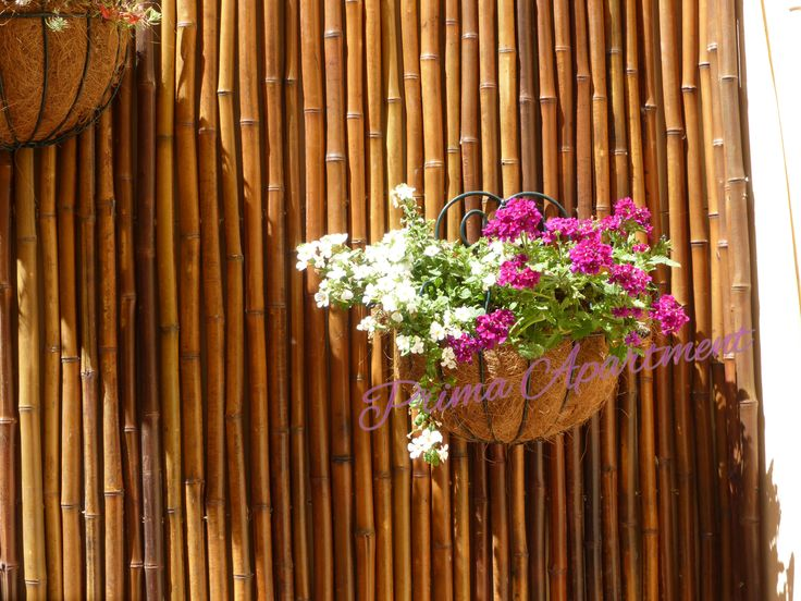 Hanging Basket in the Court Yard