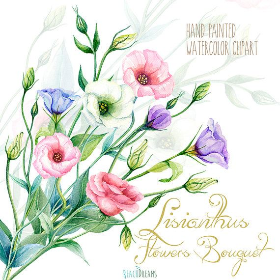 Lisianthus Flowers Hand Painted Clipart Watercolor. Eustoma