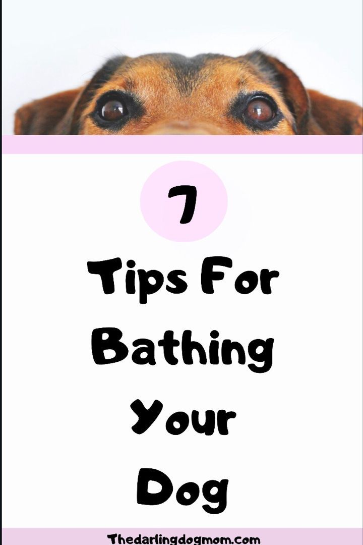 Seven Tips For Bathing Your Dog In 2020 Puppy Grooming Dog Grooming Tips Dog Grooming Tools
