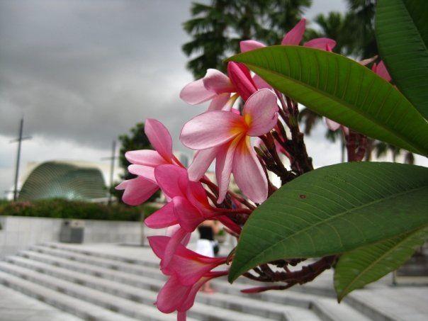 Flowers Singapore
