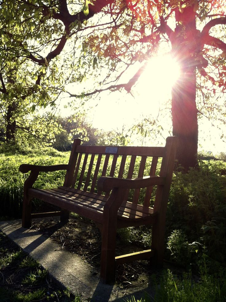 Beautiful sun drenched place to rest, this wooden bench off a dainty footpath. Lingfield, Surrey, UK.  ᵇʸ ˢᵒᵒᵖˢᶦᵉ ᵍᵃᵗʷᵒᵒᵈ