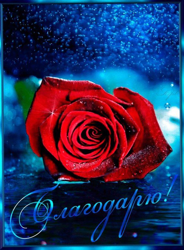 изотермического картинки блестят розы красные конструкция представляет собой