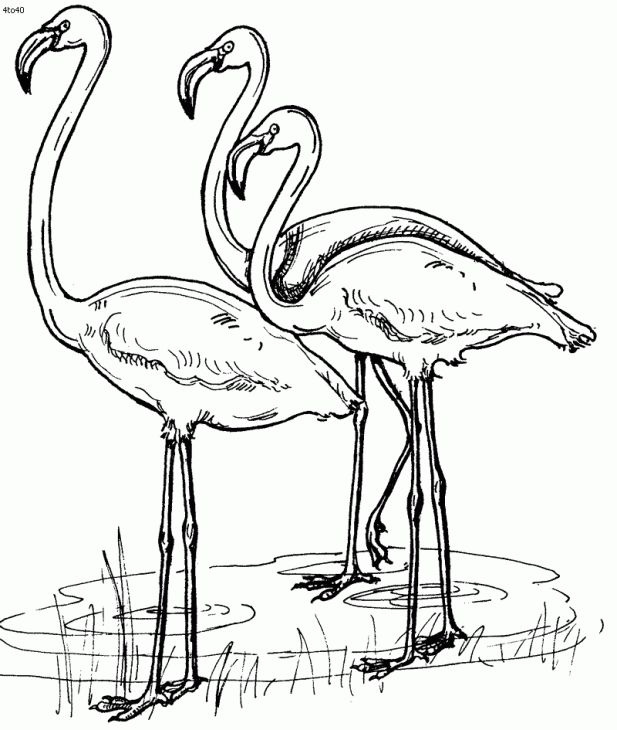 Fuchsia Coloring Page For Kids: A Group Of Flamingo Coloring Page Online