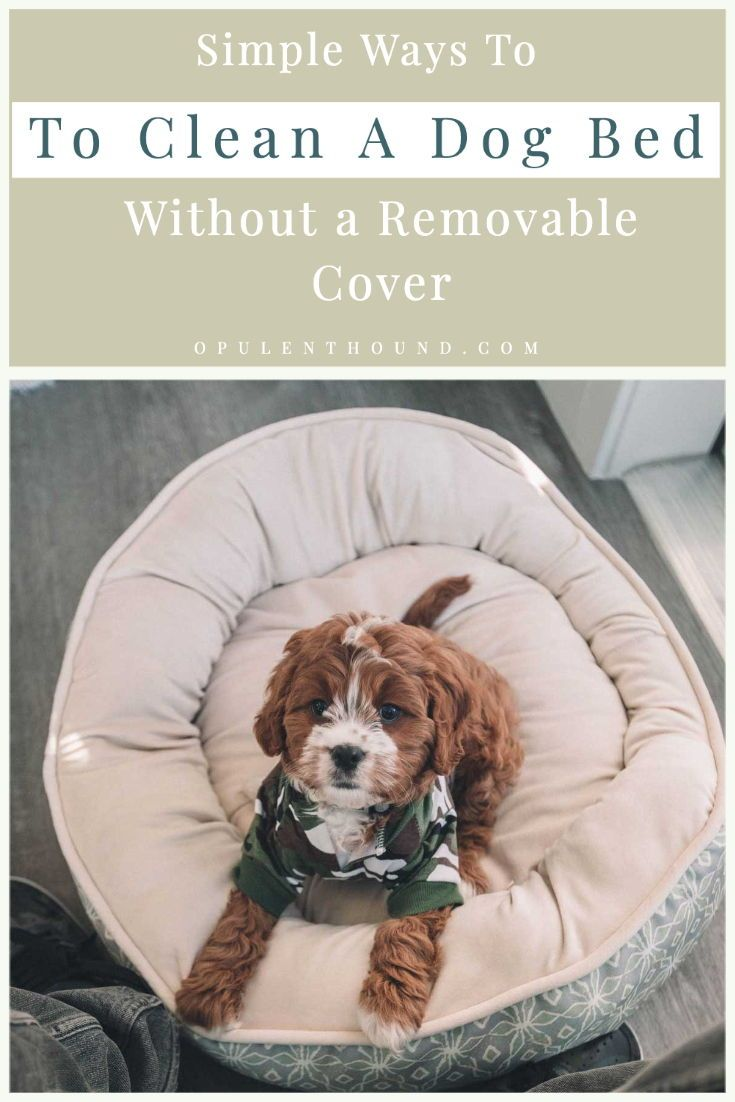 Simple Hacks To Clean A Dog Bed Without A Removable Cover Dog Bed Dog Beds For Small Dogs Dogs