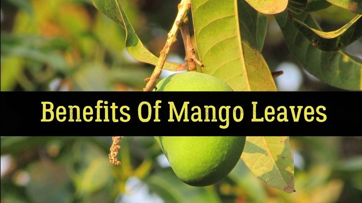 Benefits Of Mango Leaves For Diabetics And Better Health