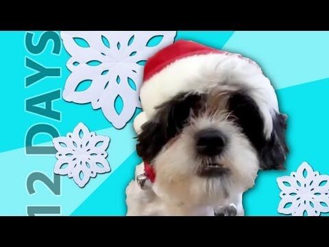 Merry Christmas from the Talking Animals channel. Share this with someone you love as a Christmas card!  Be a fan on facebook: http://facebook.com/klaatu42  Follow on twitter: http://twitter.com/talkinganimals    Voices of Bien and Molly by guest voice Jenni Racicot!    Big thanks to EVERYONE who submitted videos of their pets. I wish I could ha...