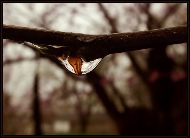 Tiny leaf inside water drop
