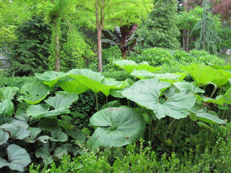 » Fukuoka's Food Forest