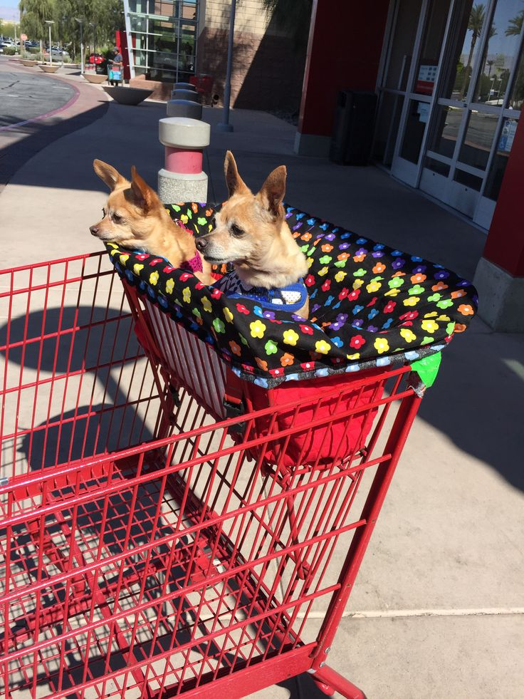 Do you take your dog everywhere? Does that include having to put them in the basket of the shopping cart? Well we have just the thing to keep them comfy and contained while you wheel up and down the a