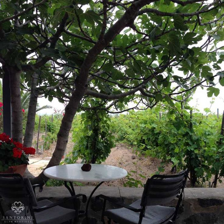 #santorini #winery Learn all about Santorinian wines…