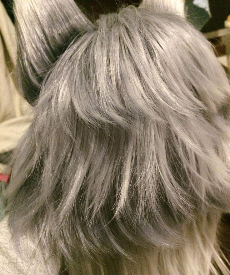 きれいな段に染められたよ 狼の写真見ながら根元の濃い部分と毛先の白い部分気にしながら染めてるよ #ウイッグ加工 #てもにゃ手仕事 by temo_nya