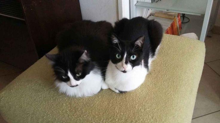 Siamo 2 tipi niente male: Yuki e Oreste - http://hormiga.it/siamo-2-tipi-niente-male-yuki-e-oreste/ Adoption, Adozioni Gatti, Adozioni urgentissime
