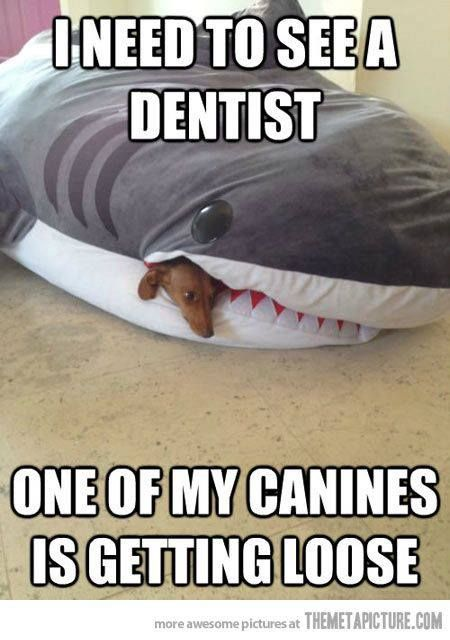Canines are important!  Are you looking for a dental assisting study guide? www.DentalAssistantStudy.com