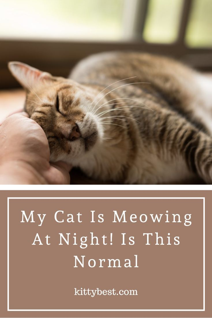 My Cat Is Meowing At Night Is This Normal Causes And Solutions Cat Meowing At Night Cats Meows