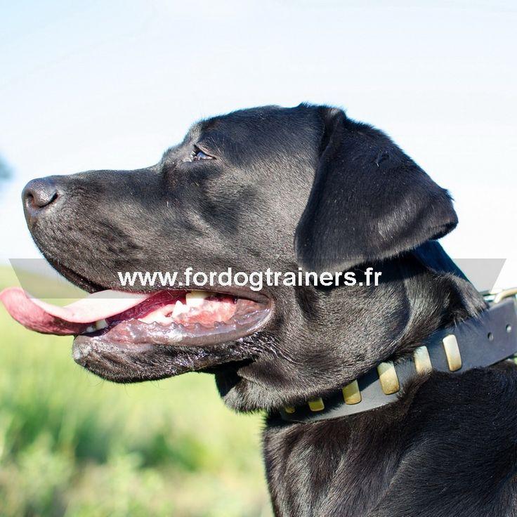 """#Collier pour chien #labrador """"Mener une vie de luxe""""-> 30,30 €"""