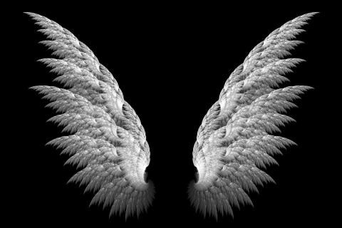 angel wings black background - photo #7