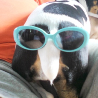 #animals in clothes #glasses #dogs #humor #pets #sun glasses: Animals In Clothes, Animal In Clothing, Pet Sun, Humor Pet, Funny Animal, Pet Humor, Animal Fashion, Animal Portraits