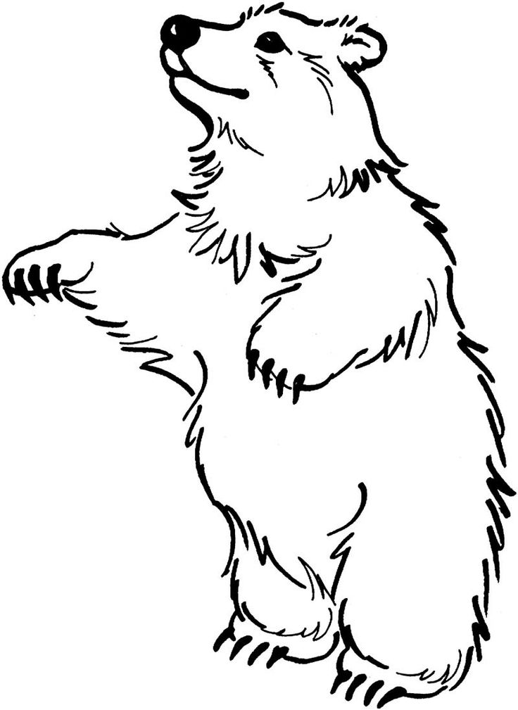 The Bear Stand Up Coloring Pages