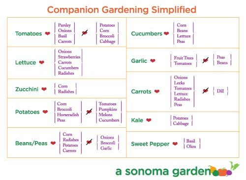 Best Companion Planting Images On   Organic Gardening