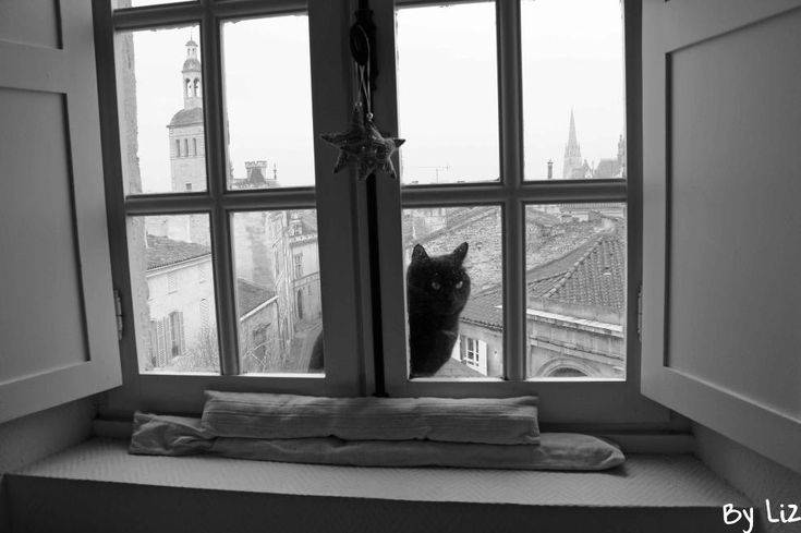 Photo noir et blanc chat la fen tre photo for Fenetre noir et blanc
