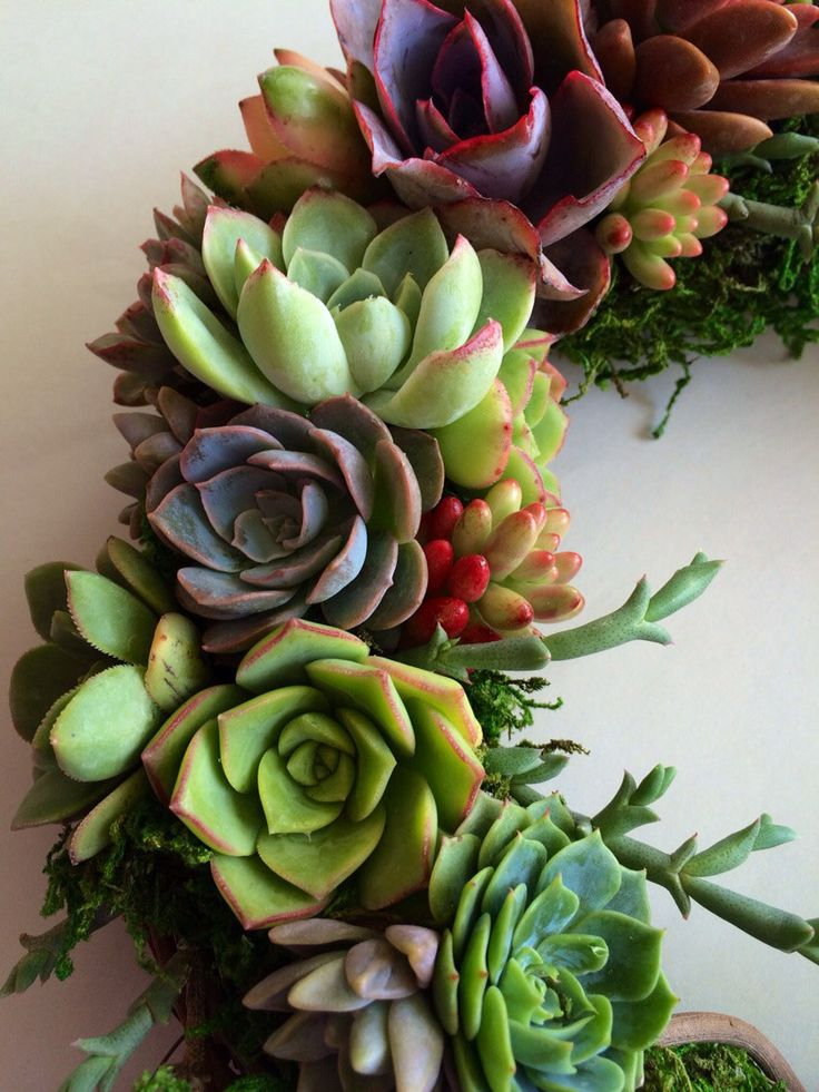 12 Succulent wreath 47.00 by Fairyblooms on Etsy, $47.00