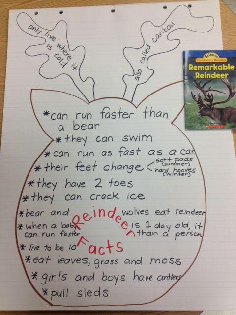 reindeer facts chart
