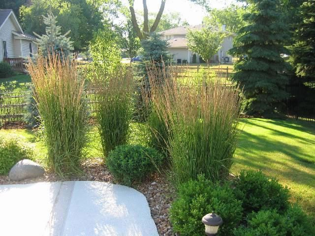 Karl foerster grasses yard pinterest patio privacy for Privacy grass