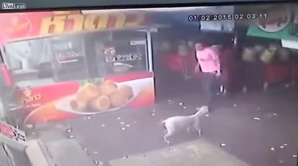 Jerk Tries To Kick Dog, Discovers The Meaning Of Karma. Serves him right! Yay Karma!!!