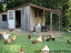 Really good info on chickens and how to deal with eggs.