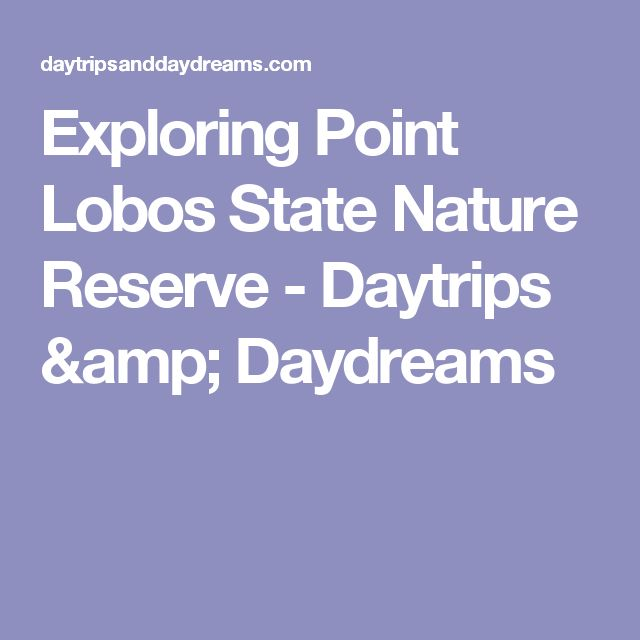Exploring Point Lobos State Nature Reserve - Daytrips & Daydreams