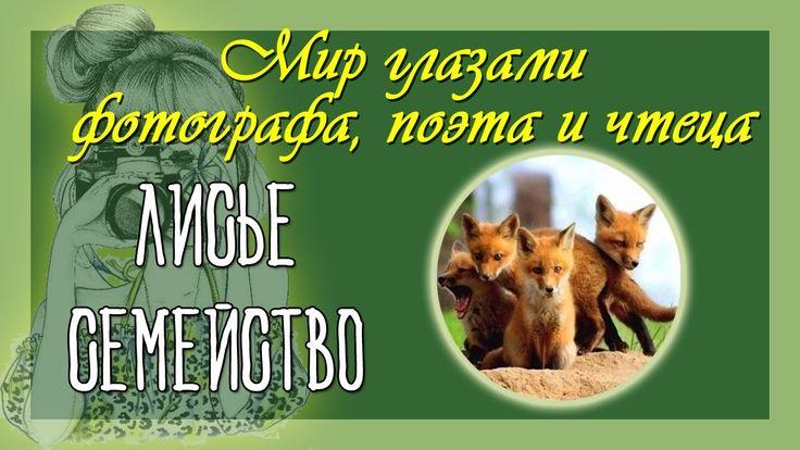 Стихи и фото животных Лисье семейство