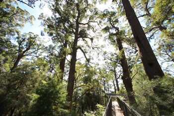 The Valley of the Giants in the Southern Forest of Western Australia is on the Bibbulmun Track!