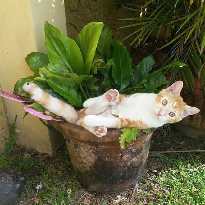 20 chats qui se prennent pour des fleurs