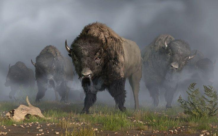 Bison vanguard by daniel eskridge in 2021 buffalo art