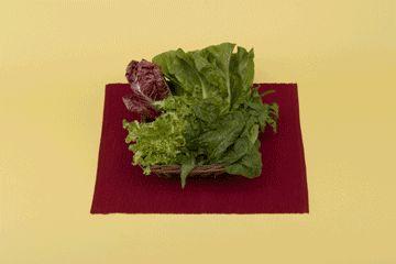 Non sai come conservare l'insalata e le verdure a foglia verde nel tuo frigo? Scopri come su: http://www.foxymega.it/#foxy#optimize #insalata #conservare#food#cucina # organization#ideas#home #space#fridge