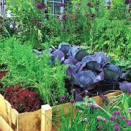 Им хорошо друг с другом, или О совместимости овощных культур / огород и грядки