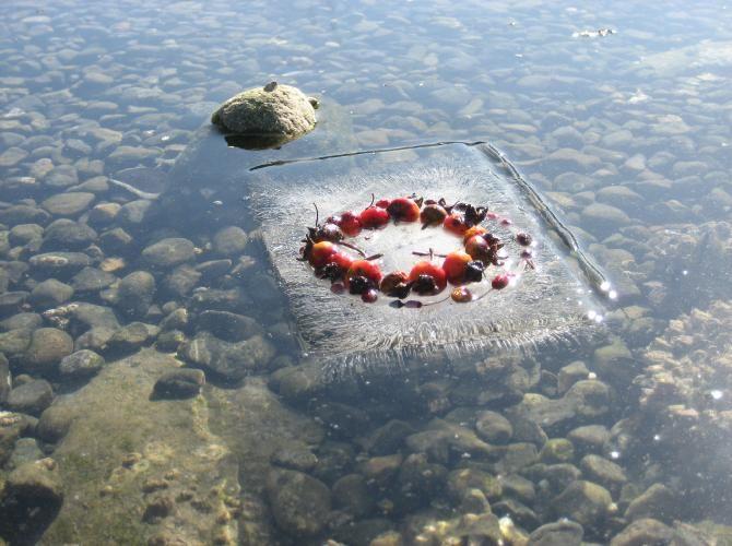 Esculturas de hielo con incrustaciones de semillas repoblan los lechos de los ríos a medida que se derriten   www.ottoyanna.com