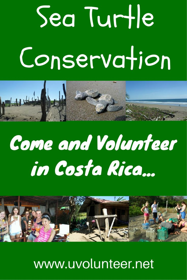 All the info you need to know about volunteering in Costa Rica in sea turtle conservation. Click here to find out more:  http://blog.uvolunteer.net/why-should-you-care-about-costa-rica-sea-turtle-conservation