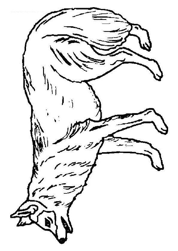 Dessin à Colorier Dun Loup Coloriages Animaux De La Forêt