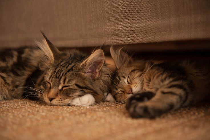 Wilma & Tiggytoo