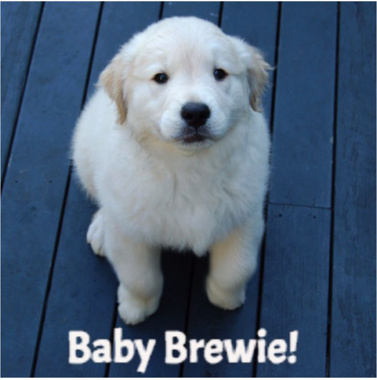 Kind of a strange story . . . This one is named for my incredibly white Golden Retriever named Brewster! He likes the bracelet too! This one was more of a fit when he was a puppy.